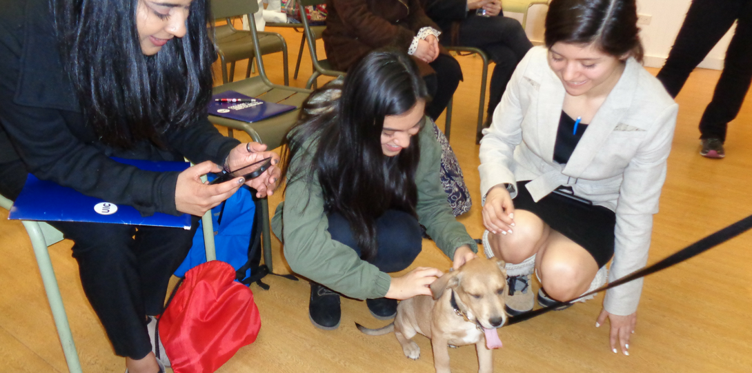Students petting puppy at PAWS Chicago